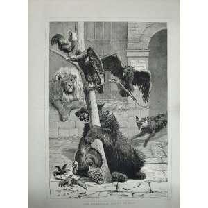 1876 Animals Lion Bear Turkey Vulture Birds Fine Art: Home & Kitchen