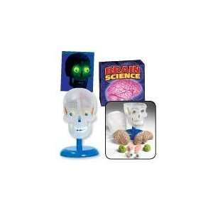 Build a Brain & Skull Model & Book With Glowing Eyes Toys