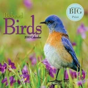Backyard Birds   2010 Big Print Wall Calendar