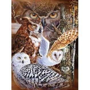 Signature 11 Owls Super Soft Plush Queen Size Blanket by Gardner at