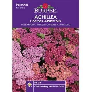 Burpee Achillea Cherries Jubilee Mix Seed 39334