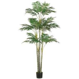 6? Areca Palm Tree x26 in Plastic Pot Green (Pack of 2